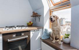 Гурьевск кухня собака окно